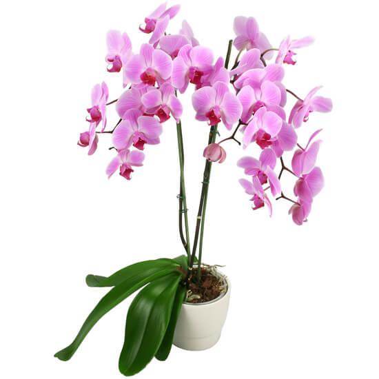 Entretenir son orchidée